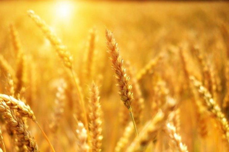 Płatki pszenne i ich właściwości